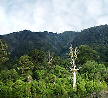 Rimutaka Forest by Evan Lole