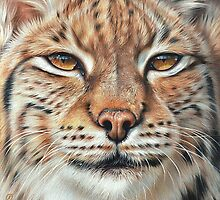 Faces of the wild - Lynx by Elena Kolotusha