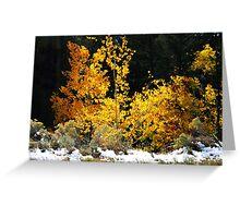 Aspen Glow Greeting Card