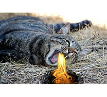 My Cat Breathes Fire! Photographic Print