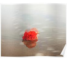 Red rose floral photography Poster