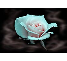 Smokey Rose Photographic Print