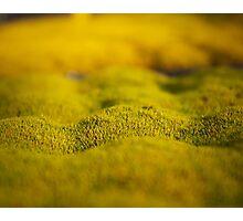 Macro grass hills minimalist photography Photographic Print