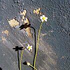 Driveway Flowers by gracelouise