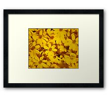 Euryops pectinatus flower photography Framed Print