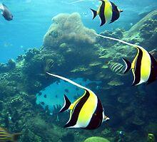 Plenty Of Fish In The Sea by gracelouise