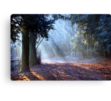 The Emerald Forrest Canvas Print