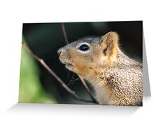 Have A Nutty Day Greeting Card