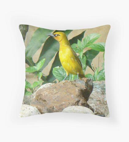 Weaver Bird  (III) Throw Pillow