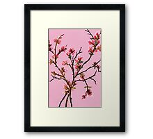 Cherry Blossoms from Amphai Framed Print