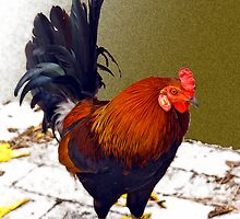 Rooster #2 by Hank Stallings