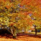Autumn Gold by avocet