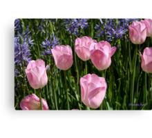 Tulips ~ Dancing in the Sunlight Canvas Print