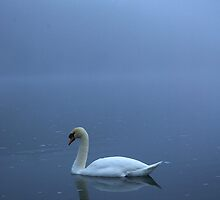 Swan on Loch Ness by Tez Watson