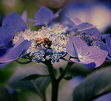 Bees Knees by SLRphotography