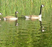 Three little ducks by groucho333