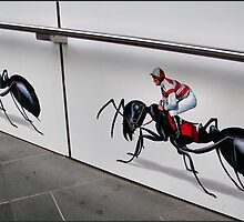 Ant Racing by Rachael Taylor
