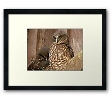 Excuse Me... Day Time Is Night Time Here... - Morepork Owl - NZ Framed Print