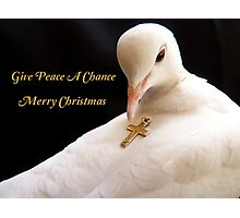 Give Peace A Chance - Merry Christmas - White Dove Photographic Print