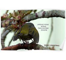 Spread your wings this festive season! - Silvereye Greeting card Poster