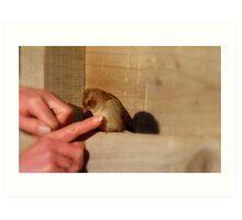 Be Gentle, I'm Only Little! - Touching A Wild Sparrow - NZ Art Print