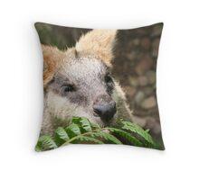 Wallaby Brunch Throw Pillow