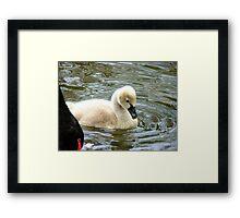 Mum...Mum.. Please Read The Ugly Duckling Story Again.. - Cygnet - Maple Glen NZ Framed Print