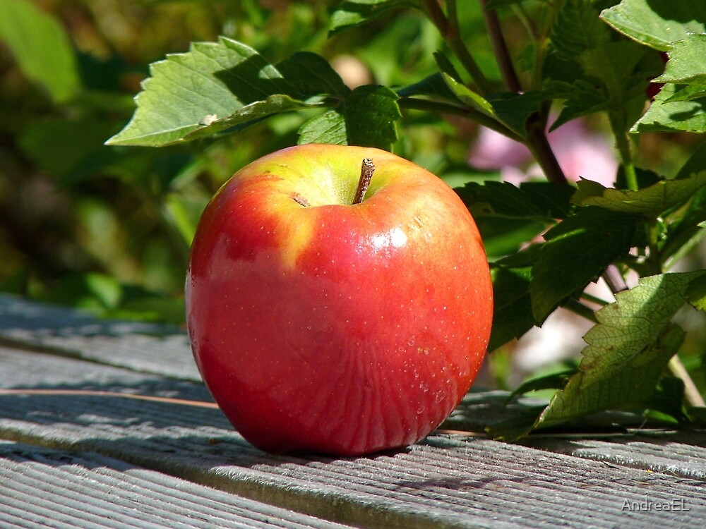 An Apple... - NZ by AndreaEL