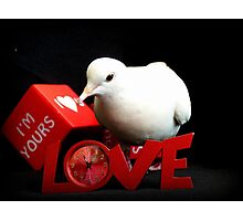 Always Make Time For Love - White Dove - NZ Photographic Print