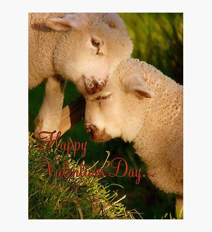 Happy Valentines Day - Lambs - NZ Photographic Print