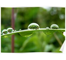 Natures Tiny Reflections! - Water Drops! - NZ Poster