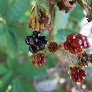 Don't Eat The Berries by Sarah Mosbey