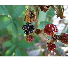 Don't Eat The Berries Photographic Print