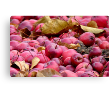 Fallen Crab-apples - Gore Southland NZ Canvas Print