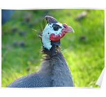 This Mask Is A Disguise!! - Guineafowl - NZ Poster