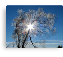 Fairy Dust - Tree Coated In Hoar Frost - Gore NZ Canvas Print