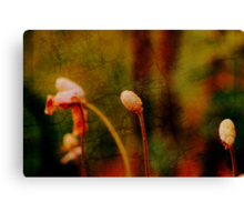 Floral metamorphosis Canvas Print