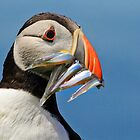 Fishy Mouthful by Lucy Hollis