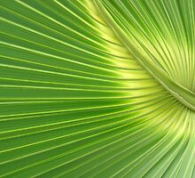 Palm Abstract by Colin Bowdery