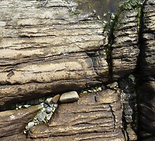 Rock crevices by Caroline Cage