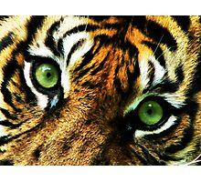 Big Cat Stare Photographic Print