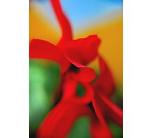 Flower Abstract.. Photographic Print