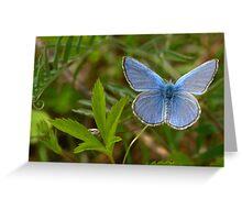 AM I BLUE? Greeting Card