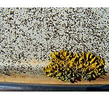 Lichen on car roof Photographic Print
