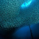 School of Sardines at Panagsama Beach by Henry Jager