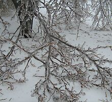 Ice Storm 2008 by islandtris