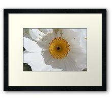 Prickly poppy Framed Print