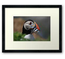 Beakful of Fish Framed Print