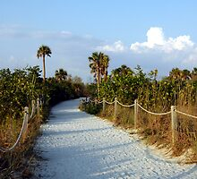 Path To Beach by Kathleen Struckle