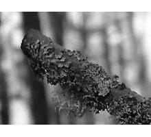 Moss Stick Photographic Print